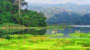 Bỏ túi bí kíp tham quan vườn quốc gia Cát Tiên
