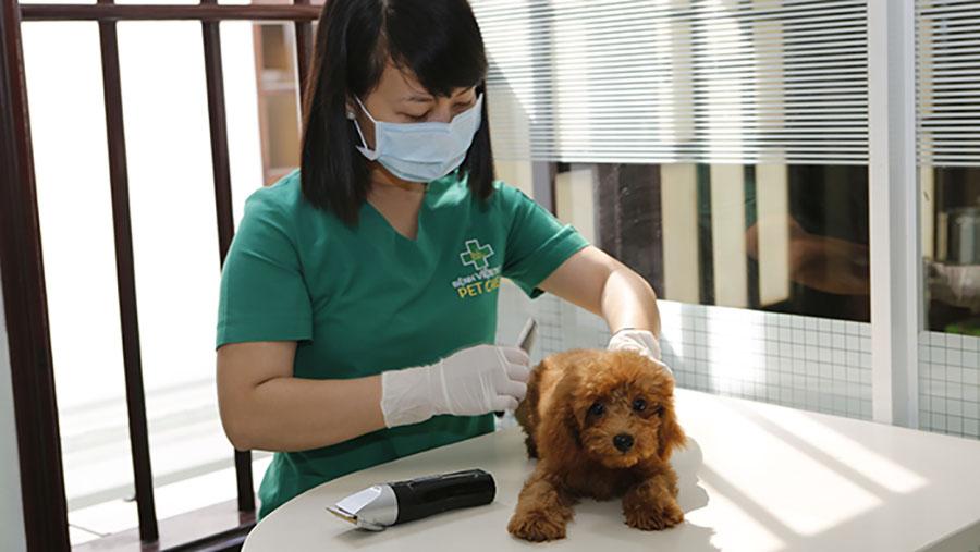 Lưu lại TOP địa chỉ phòng khám thú y chất lượng cho BOSS ở Biên